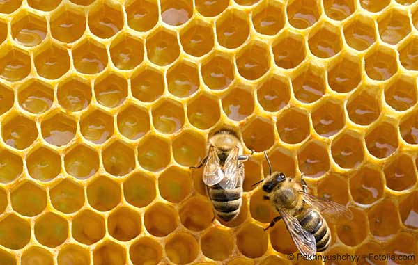 Après le président Obama aux Etats-Unis Ségolène Royal vole au secours des abeilles