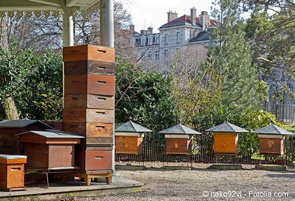 Paris capital de l'apiculture prend le plus grand soin de ses ruches