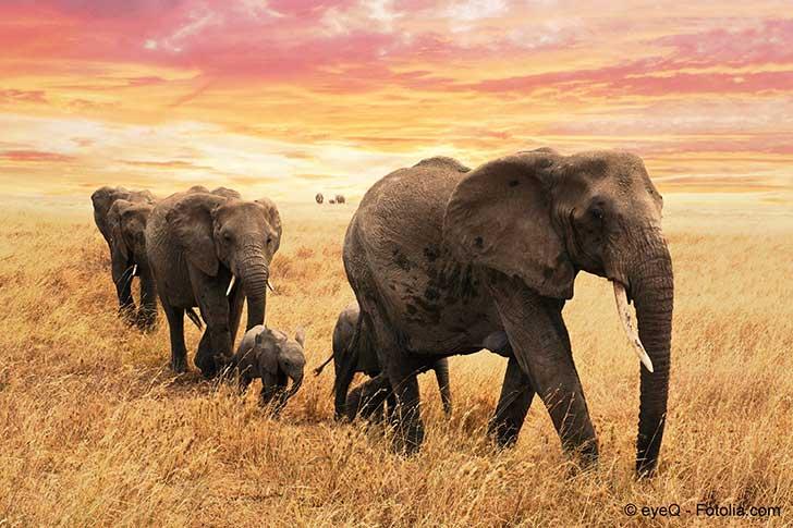 La population en Afrique est plus que d'autres tributaire de la nature