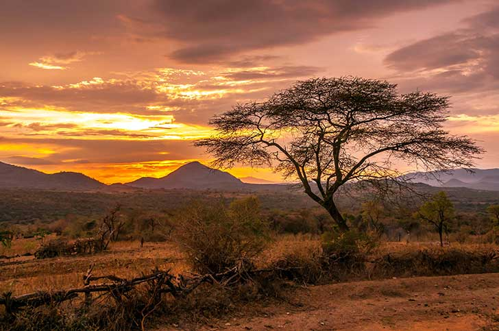 Pour reconstruire ses économies post Covid l'Afrique a besoin de la Zone de Libre échange panafricaine Pr Jean-Paul Louisot