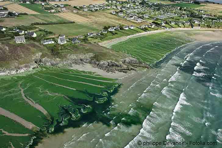 La lutte contre les algues vertes fait l�objet d�un examen critique des juges de l�Etat