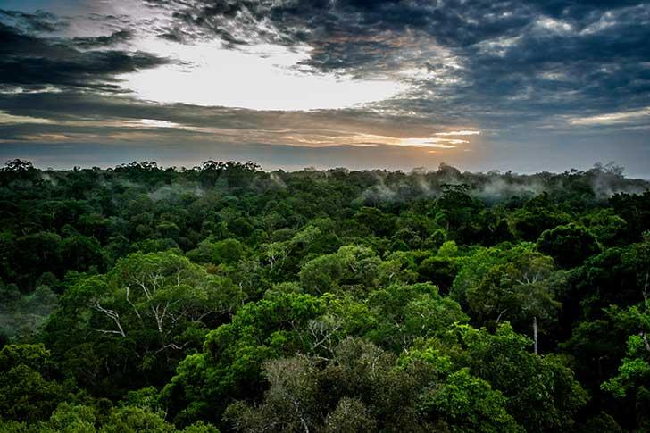 La for�t amazonienne est la proie des flammes