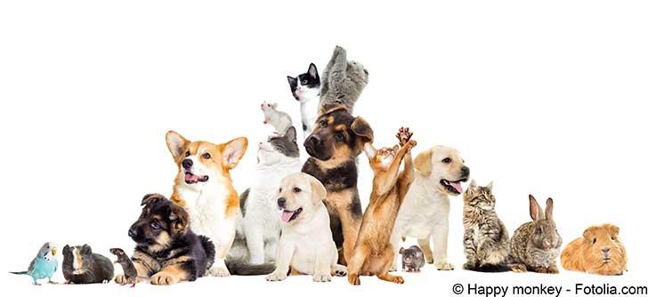 Le nouveau code juridique de l'animal est un code privé