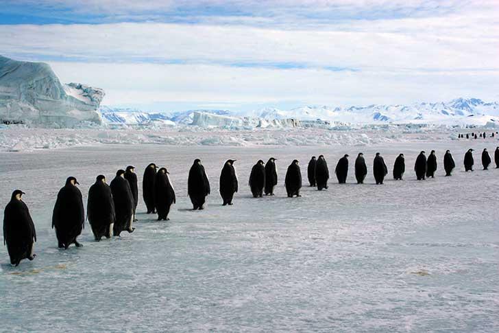 La France re�oit pendant dix jours la 43�me R�union consultative du trait� sur l�Antarctique