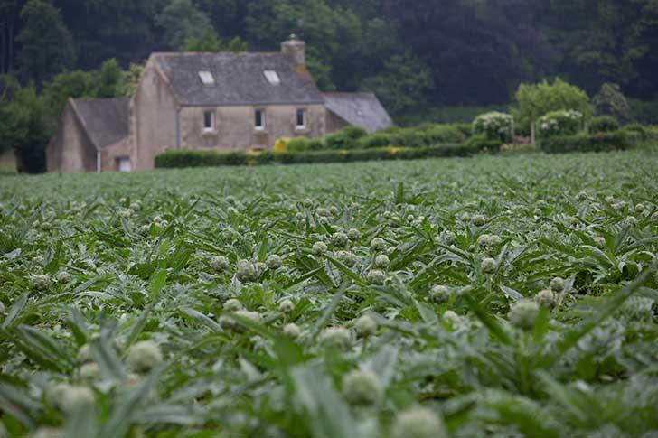 L�agriculture productiviste bretonne se met en question