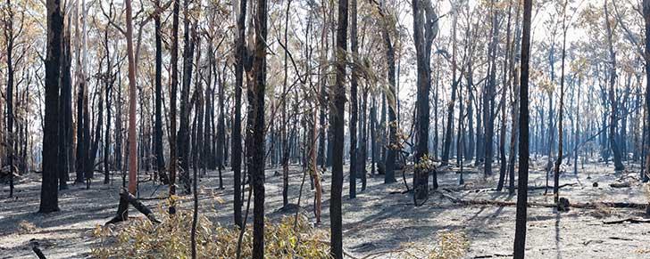 Australie : cons�quences des incendies de cet �t�