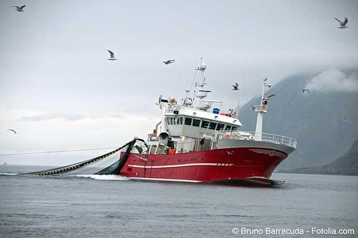 La pêche industrielle écume les océans