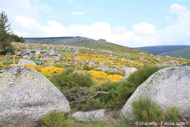 Le gouvernement se mobilise pour la biodiversité