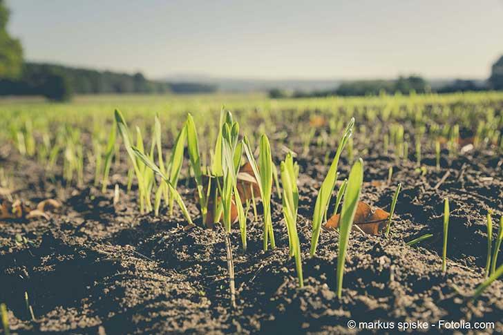 L'agriculture biologique doit sortir du flou