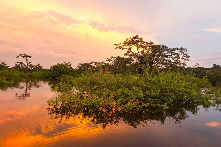 La vie sauvage s'effondre c'est la perte de la biodiversité