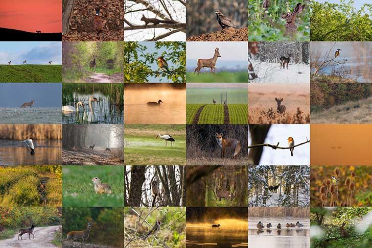 Le d�clin de la biodiversit�
