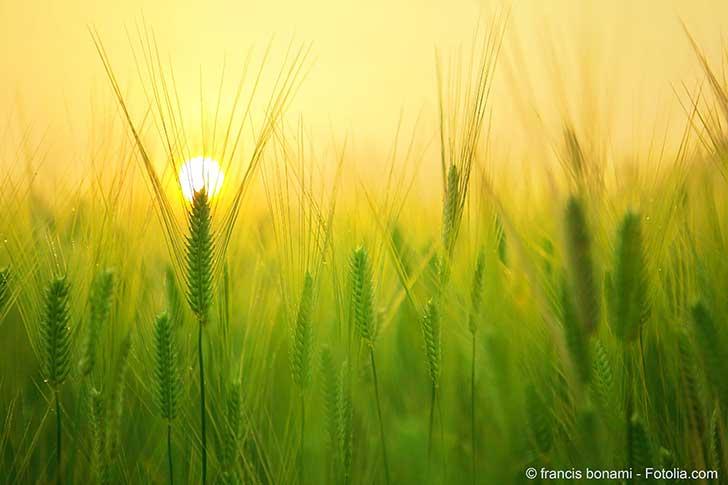 Un plan de plus pour réduire notre dépendance aux pesticides