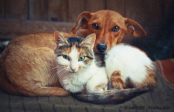 Nos animaux de compagnie sont des êtres sensibles