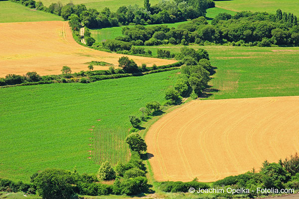 Le dérèglement climatique a des conséquences négatives sur la culture des céréales