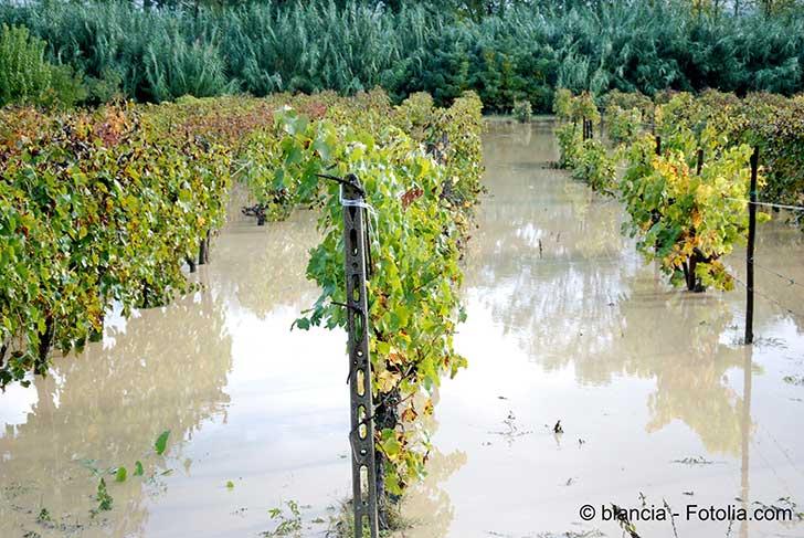 Indemnisation des calamit�s agricoles
