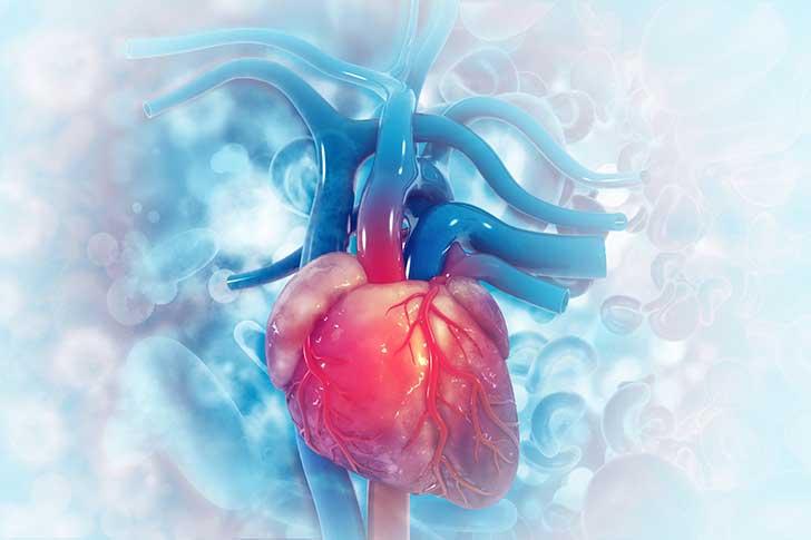 Les maladies cardiovasculaires : premier risque sant� en France