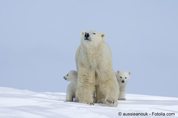 Dans l�Arctique le changement climatique redessine les relations internationales