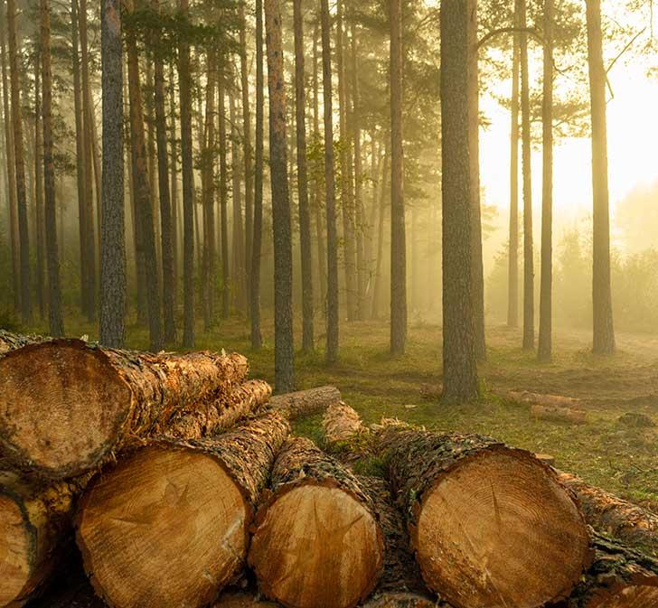 La filière française du bois reste à organiser
