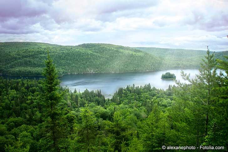 La pr�servation des espaces bois�s conditionne la limitation du r�chauffement climatique
