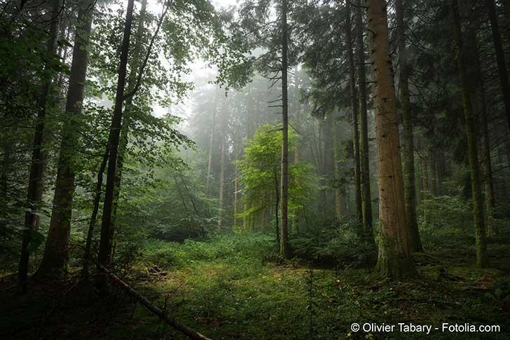 Il faut planter des arbres pour att�nuer le r�chauffement de l�atmosph�re