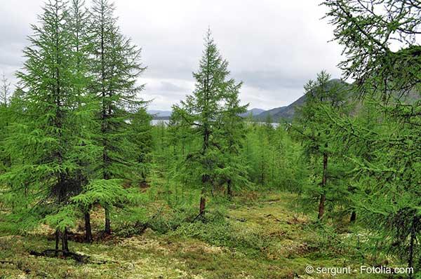 La Sibérie victime de la sécheresse est en proie à des incendies catastrophiques