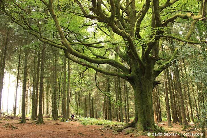 La FAO appelle le monde à nourrir l'humanité sans détruire de nouvelles forêts