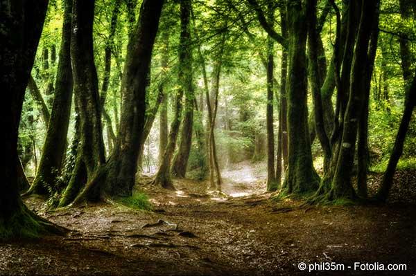 Les forêts sont les poumons du monde et il faut les reconstituer