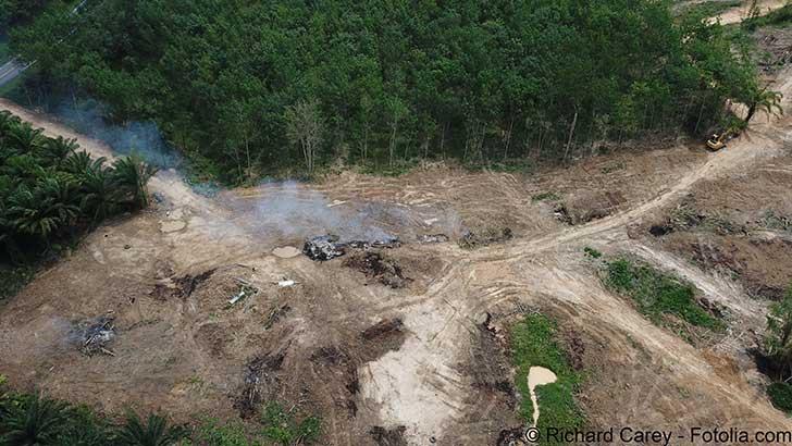 En France il reste à lutter contre la déforestation importée