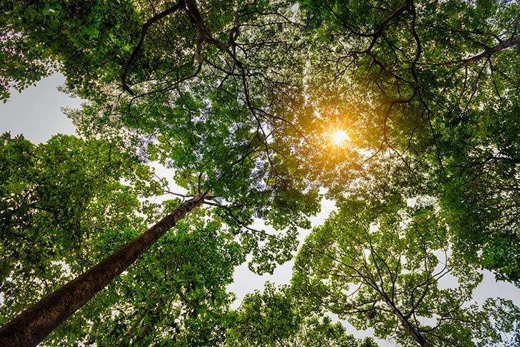 Défendre l'environnement n'est pas une activité de tout repos