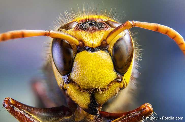 Des scientifiques dressent le bilan des dangers des insectes envahissants