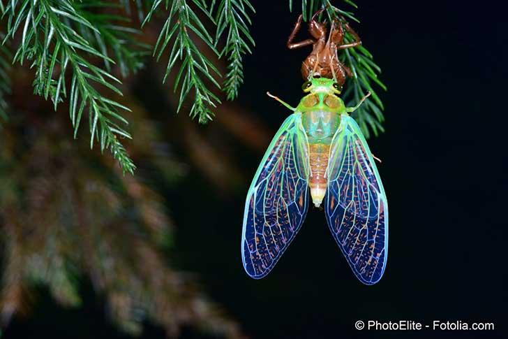 La lumière artificielle perturbe la vie des plantes et des insectes qui les visitent