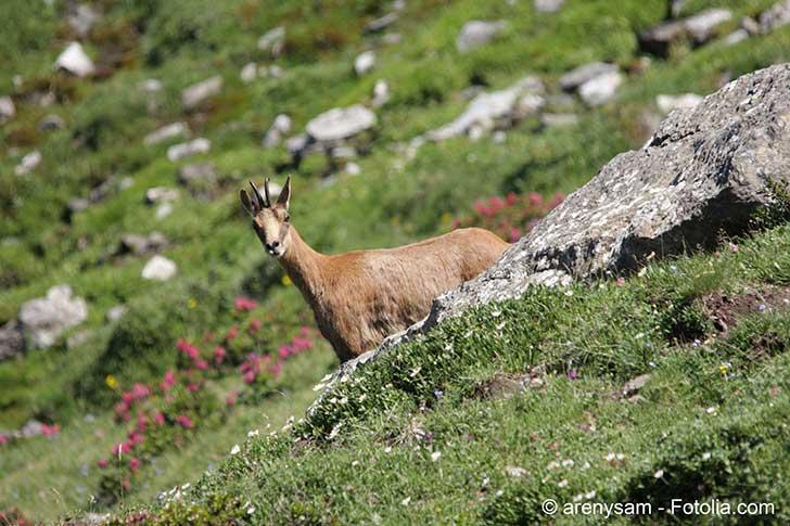 La biodiversité est détruite par l'activité humaine : la chasse, la pêche et l'agriculture