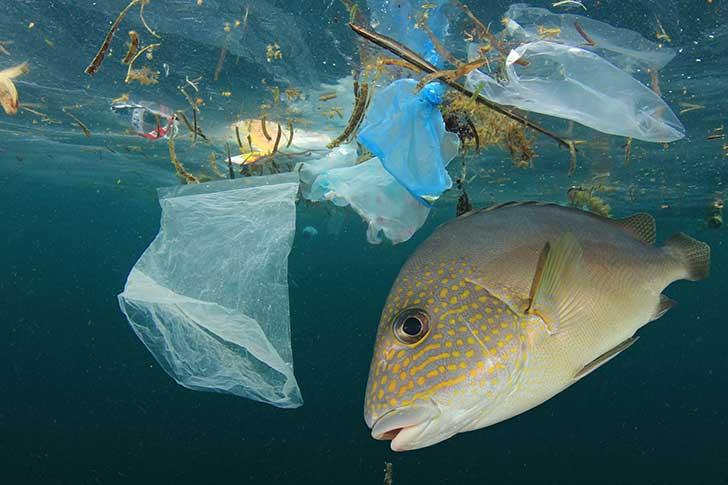 Le WWF milite pour un monde sans plastique