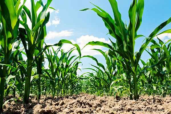 De nouveaux OGM les NPBT risquent de perturber la réglementation communautaire des OGM