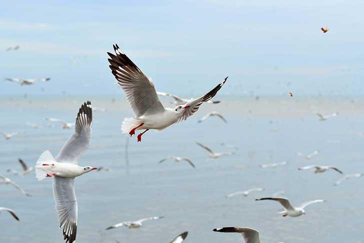 La p�che industrielle prive les oiseaux de mer de leur nourriture naturelle