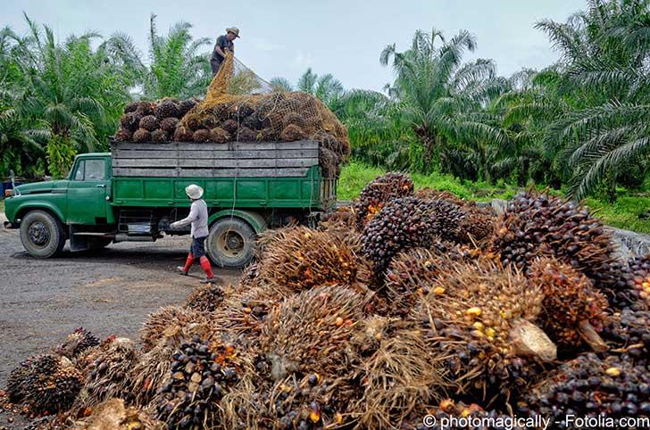 Les agriculteurs fran�ais s�opposent � l�utilisation de l�huile de palm