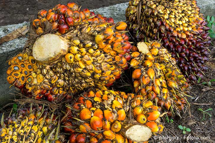 L�importation d�huile de palme en France encourage la d�forestation
