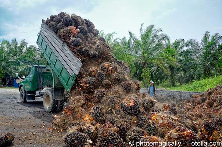Haro sur l'huile de palme