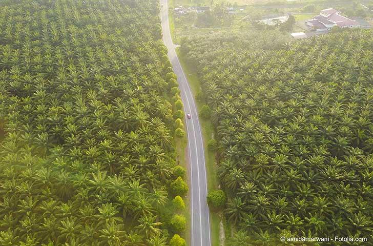 L'huile de palme bénéficie d'un avantage fiscal en discussion en tant agrocarburant