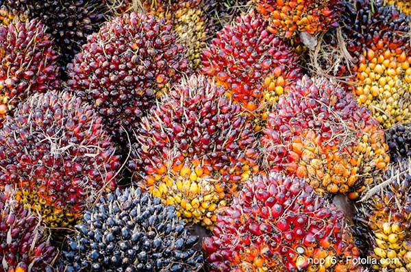 L'occident est responsable de la déforestation en important des produits non durables