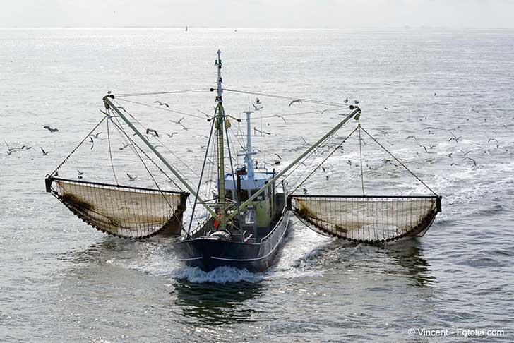 Les pêcheurs de la mer du Nord condamnent la pêche électrique