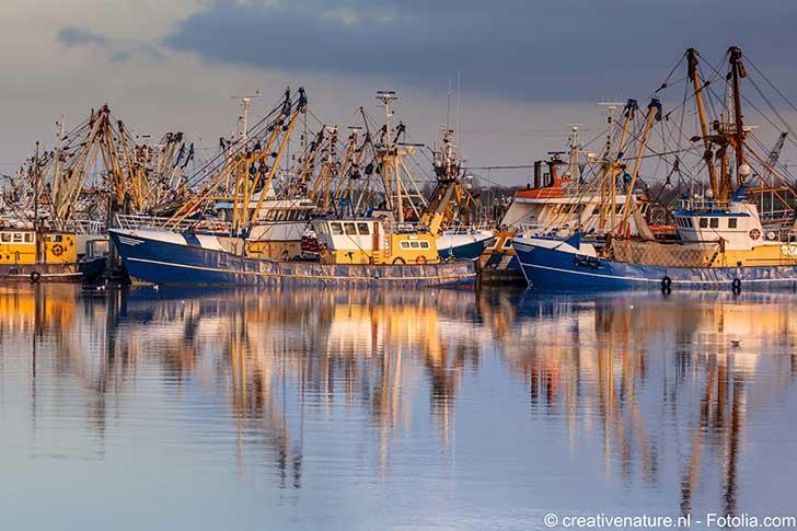 Le Parlement européen approuve la pêche électrique en mer