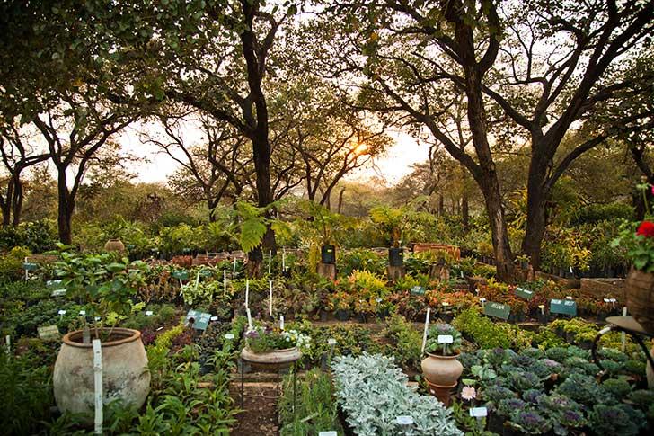La permaculture marque le retour à la terre des citadins