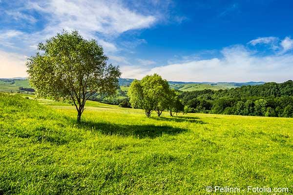Les émissions de gaz à effet de serre densifient la végétation