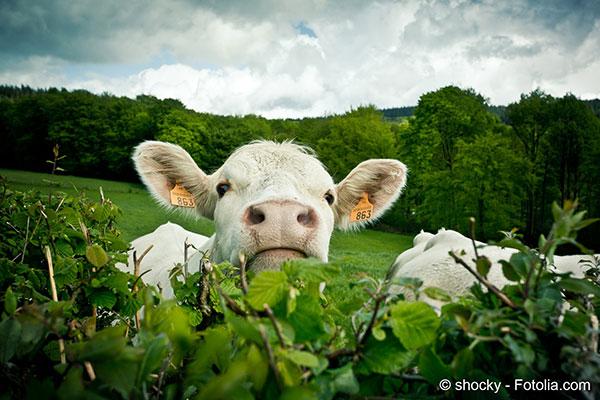 En agriculture il faut choisir entre productivité et protection de l'environnement