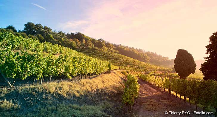 Le trio de tête européen de la viticulture mondiale a souffert d'une météo défavorable