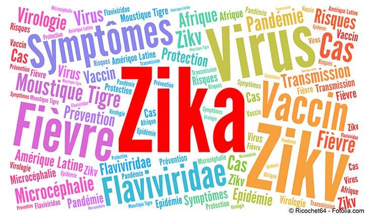 Virus Zika : la microcéphalie devient une réalité en Europe